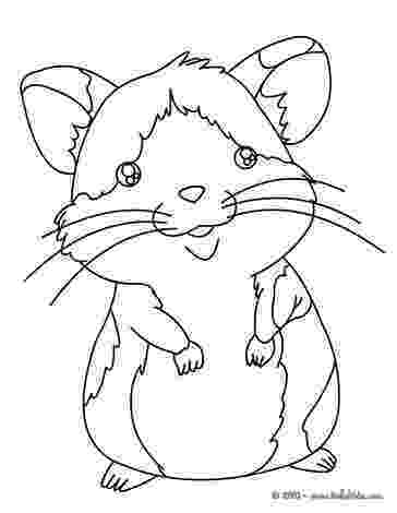 hamster coloring page hamster facts coloring hamster page