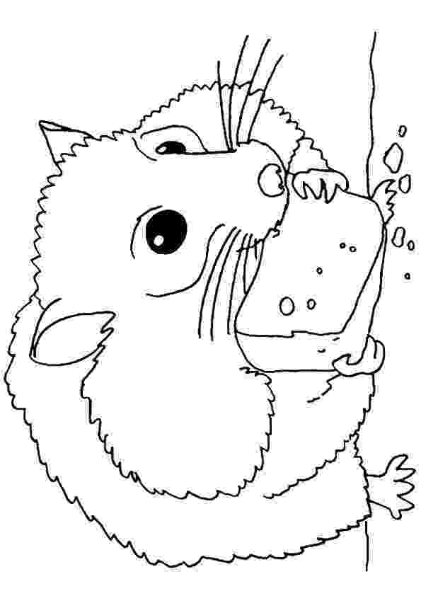 hamster coloring pages to print ausmalbilder für kinder malvorlagen und malbuch pages to print coloring hamster