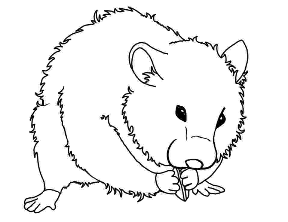 hamster coloring pages to print top 25 free printable hamster coloring pages online print to coloring hamster pages