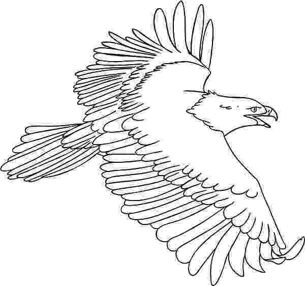 harpy eagle coloring page american harpy eagle coloring page free printable eagle harpy page coloring
