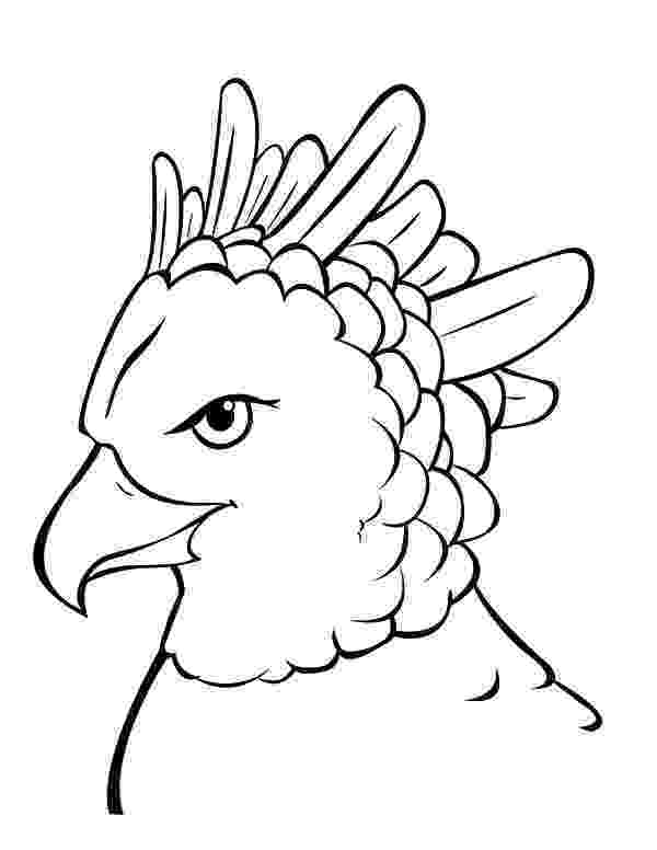 harpy eagle coloring page harpy eagle portrait coloring page free printable page eagle coloring harpy