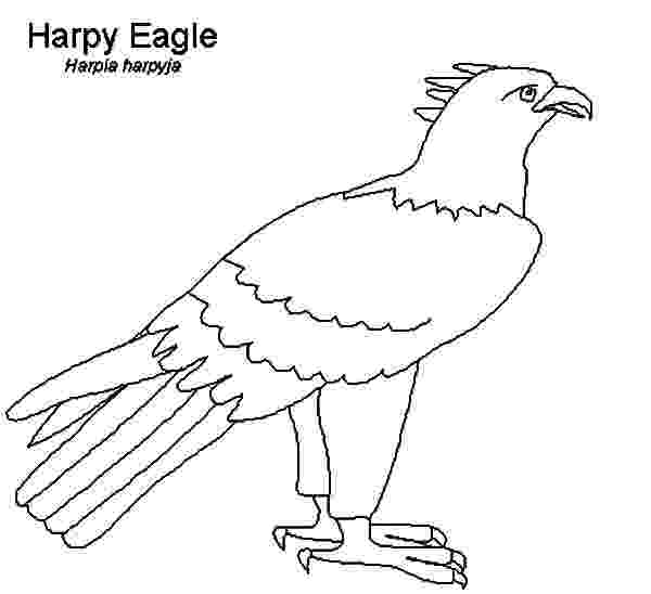 harpy eagle coloring page new coloring pages for harpy eagle lilac breasted roller coloring eagle page harpy
