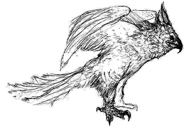 harpy eagle coloring page online free coloring pages for kids coloring sun part 15 page harpy coloring eagle