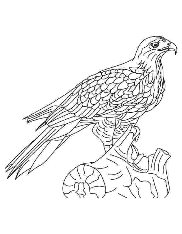 hawk coloring hawk coloring pages to download and print for free coloring hawk