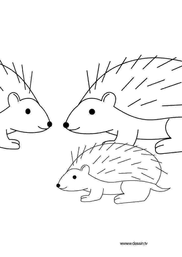 hedgehog coloring page hedgehog activities word puzzles hedgehog hidden page hedgehog coloring