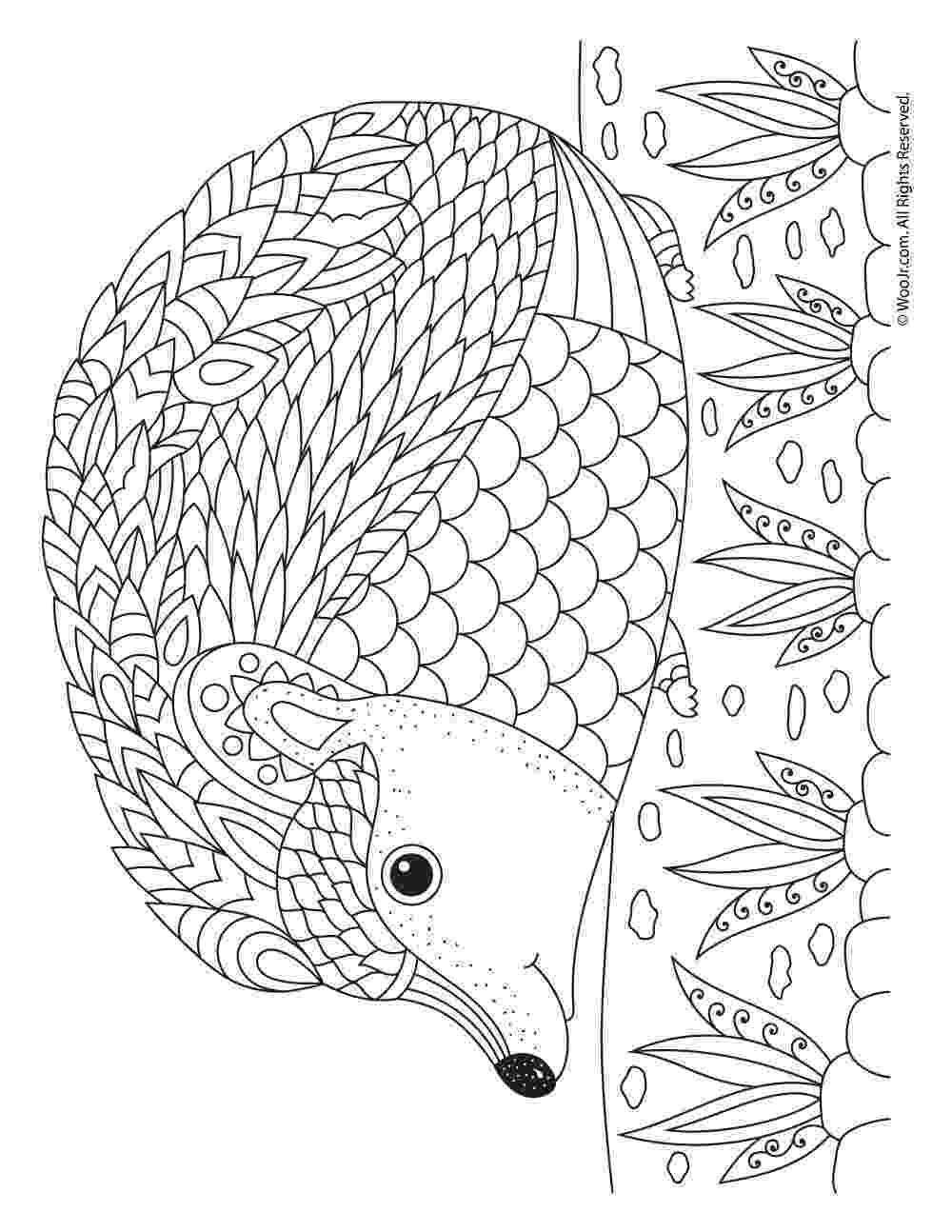hedgehog coloring page hedgehog coloring pages coloringpages1001com coloring page hedgehog
