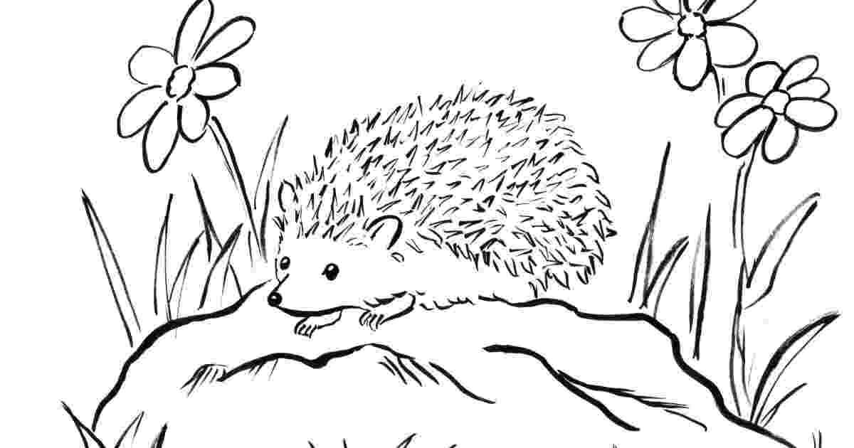 hedgehog coloring page hedgehog coloring pages to download and print for free hedgehog coloring page