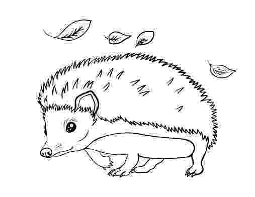 hedgehog pictures to print and colour hedgehog 18 animals printable coloring pages hedgehog and print to colour pictures
