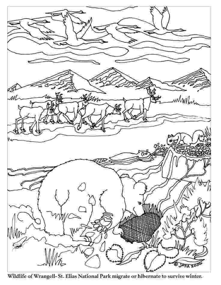 hibernation coloring pages hibernation coloring pages coloring home pages coloring hibernation