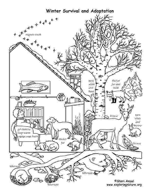 hibernation coloring pages winter animal mural survival adaptations coloring pages hibernation