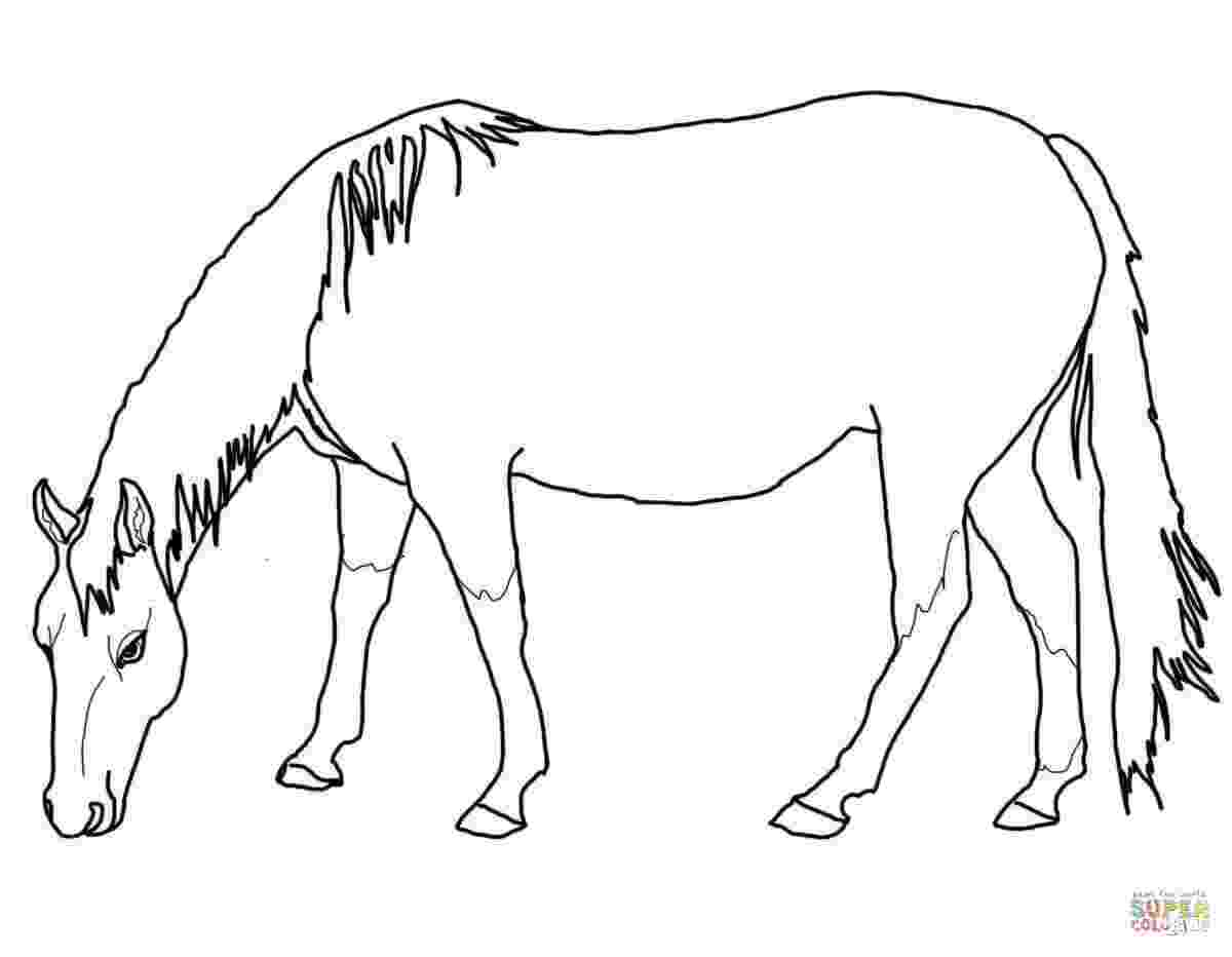 horse coloring pages to print for free free printable horse coloring pages for kids horse free print coloring to pages for horse