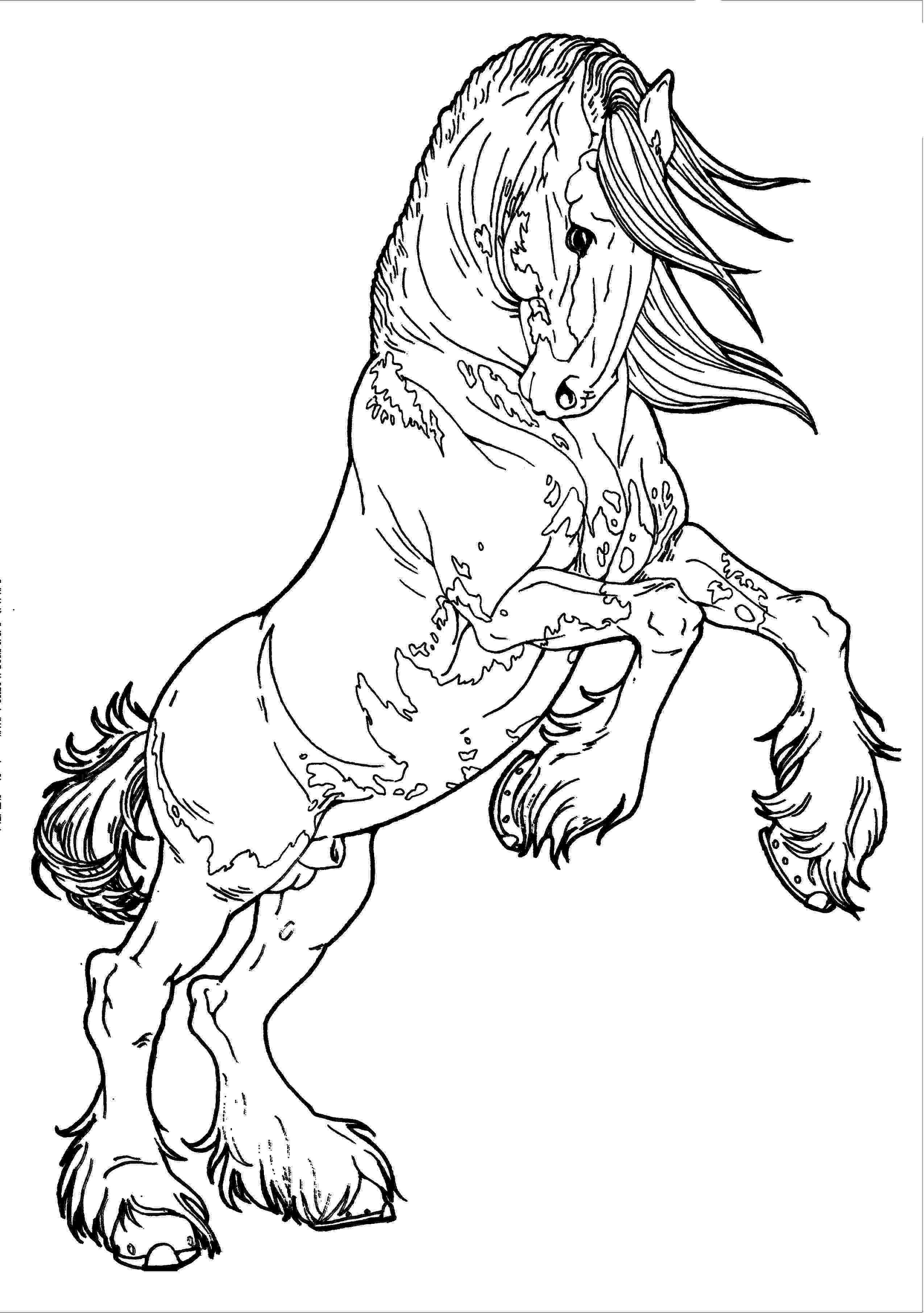 horse colouring coloring pages of horse to print 015 horse colouring