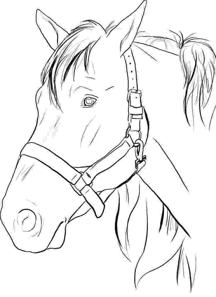 horse face coloring page coloring pages horses heads ribbon print coloring home face page coloring horse