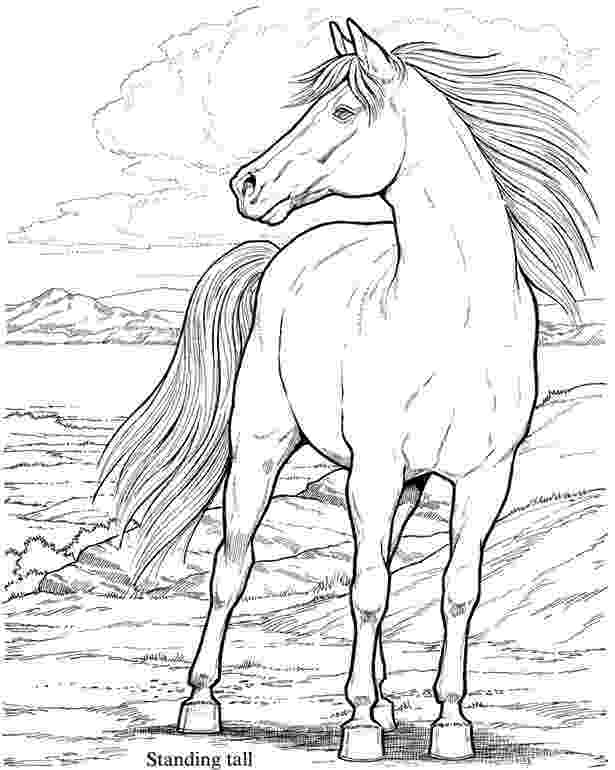 horse herd coloring pages group of horses coloring page netart horse herd coloring pages