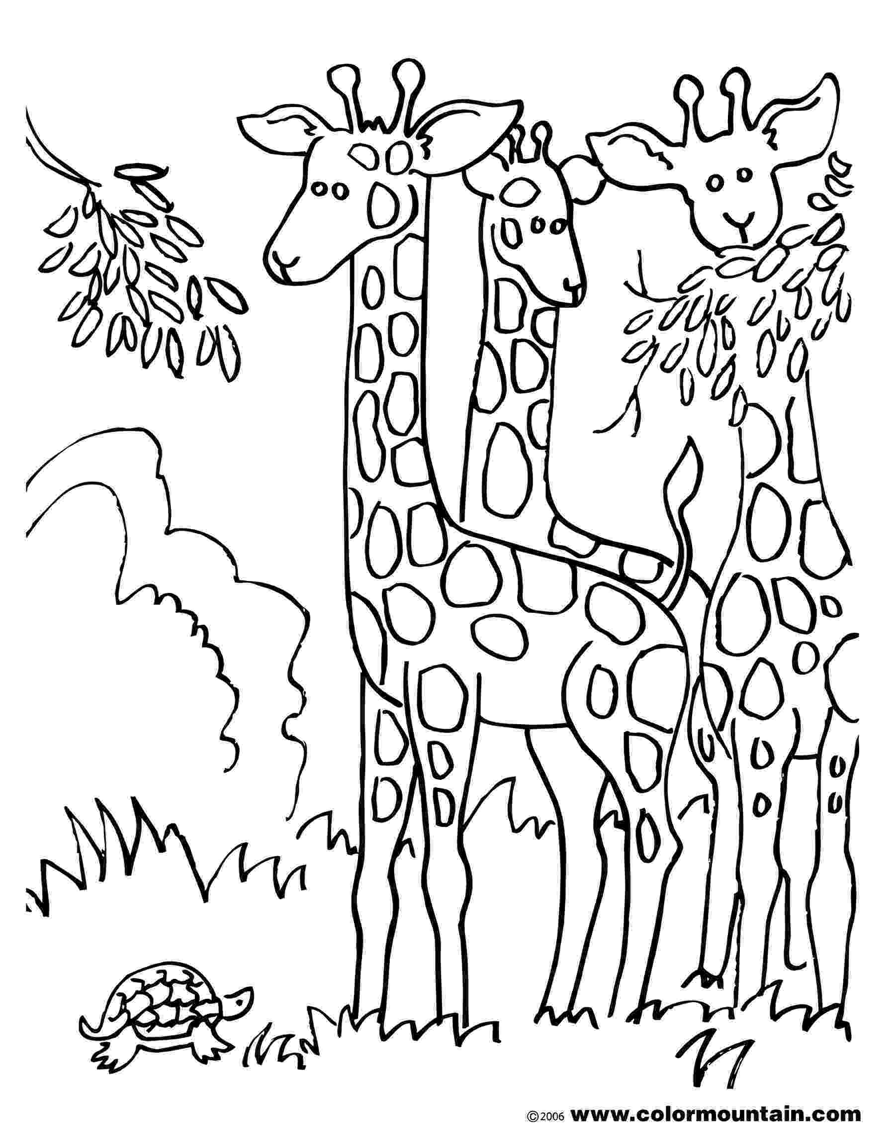 horse herd coloring pages horse herd coloring pages at getcoloringscom free horse herd pages coloring