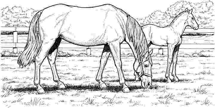horse herd coloring pages horse herd coloring pages sketch coloring page pages coloring herd horse