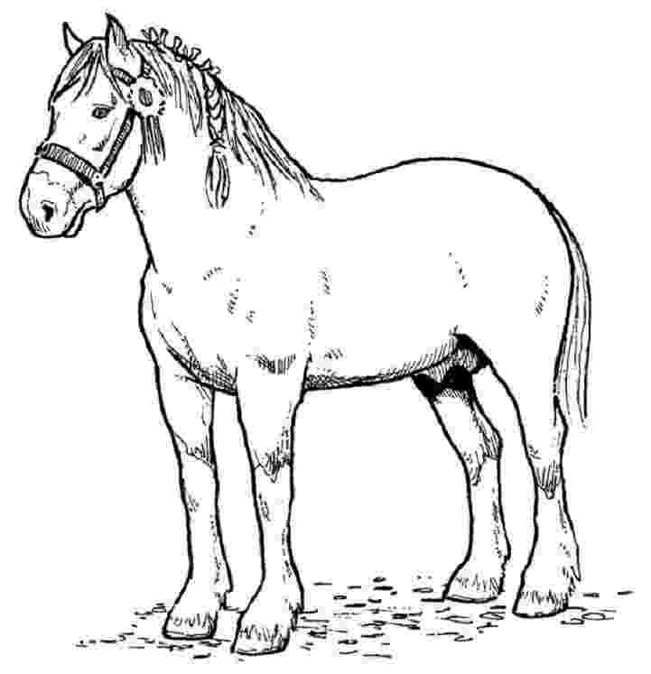 horse picture to colour horses anatomy and horse anatomy on pinterest picture horse to colour