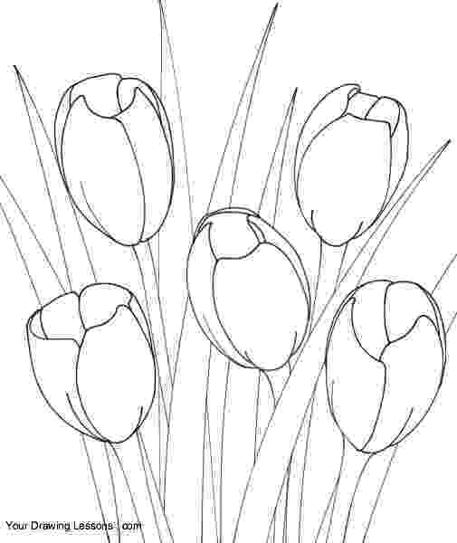 how to sketch a tulip how to draw a tulip draw central sketch tulip a to how
