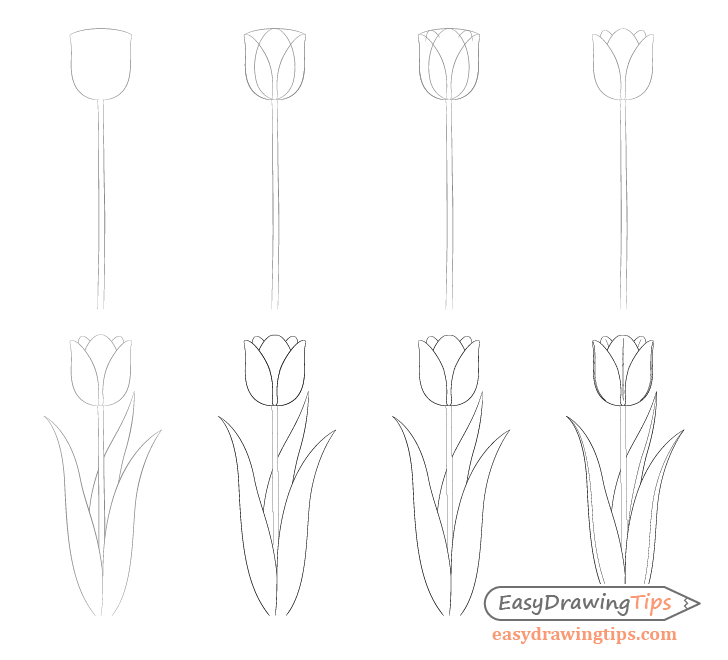how to sketch a tulip how to draw a tulip step by step drawing tutorials for tulip to a how sketch