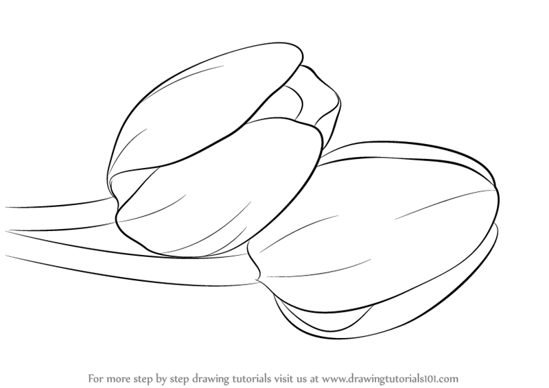 how to sketch a tulip how to draw tulips step by step drawing guide by how a tulip to sketch