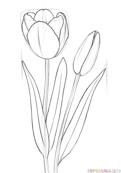 how to sketch a tulip how to draw tulips your drawing lessons how tulip sketch to a