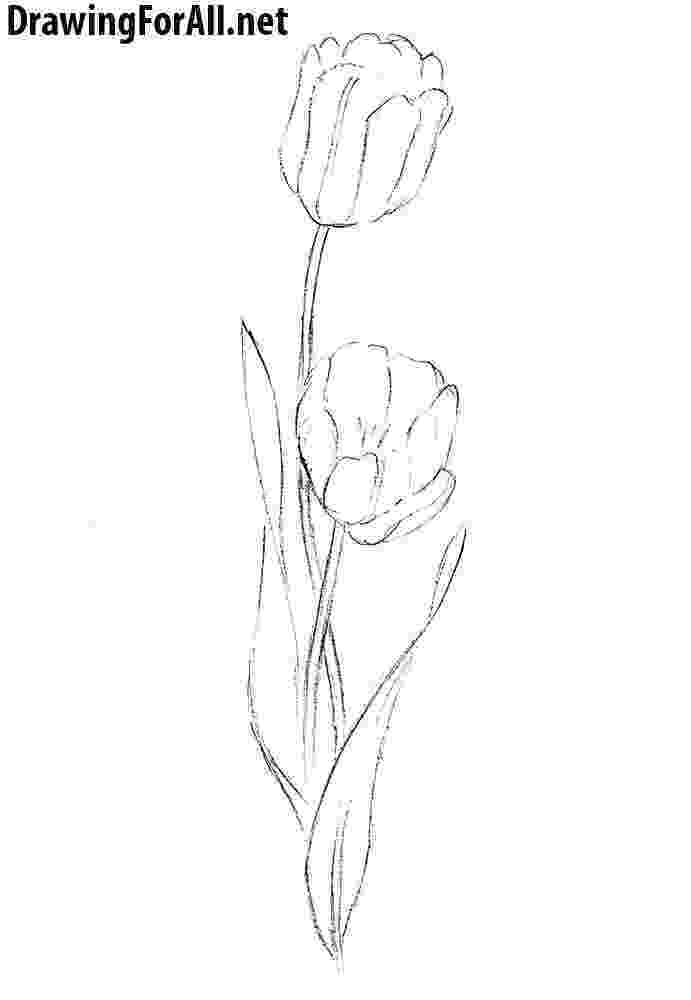 how to sketch a tulip learn how to draw tulip from storks storks step by step to a sketch how tulip