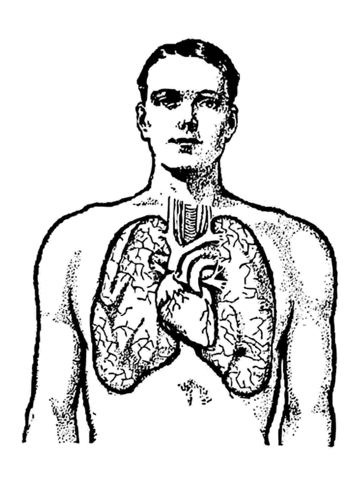 human body coloring book human body coloring pages to download and print for free human coloring book body