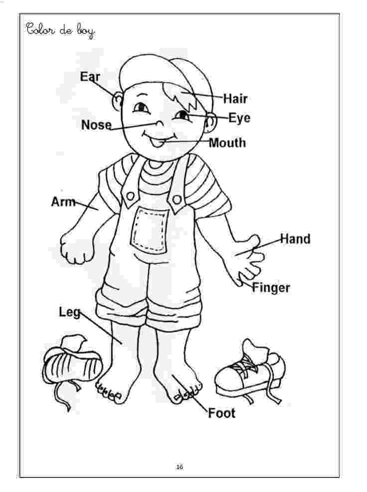 human body coloring book pin on worksheets for kids coloring body book human