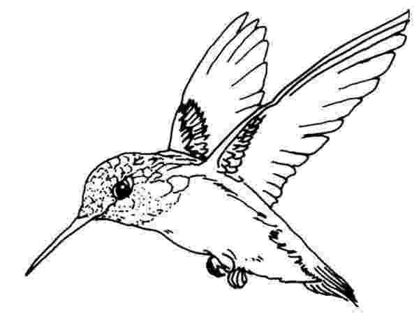 hummingbird coloring sheet birds ruby throated hummingbird bird coloring page sheet coloring hummingbird