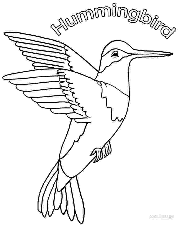 hummingbird coloring sheet free printable hummingbird coloring pages for kids coloring sheet hummingbird