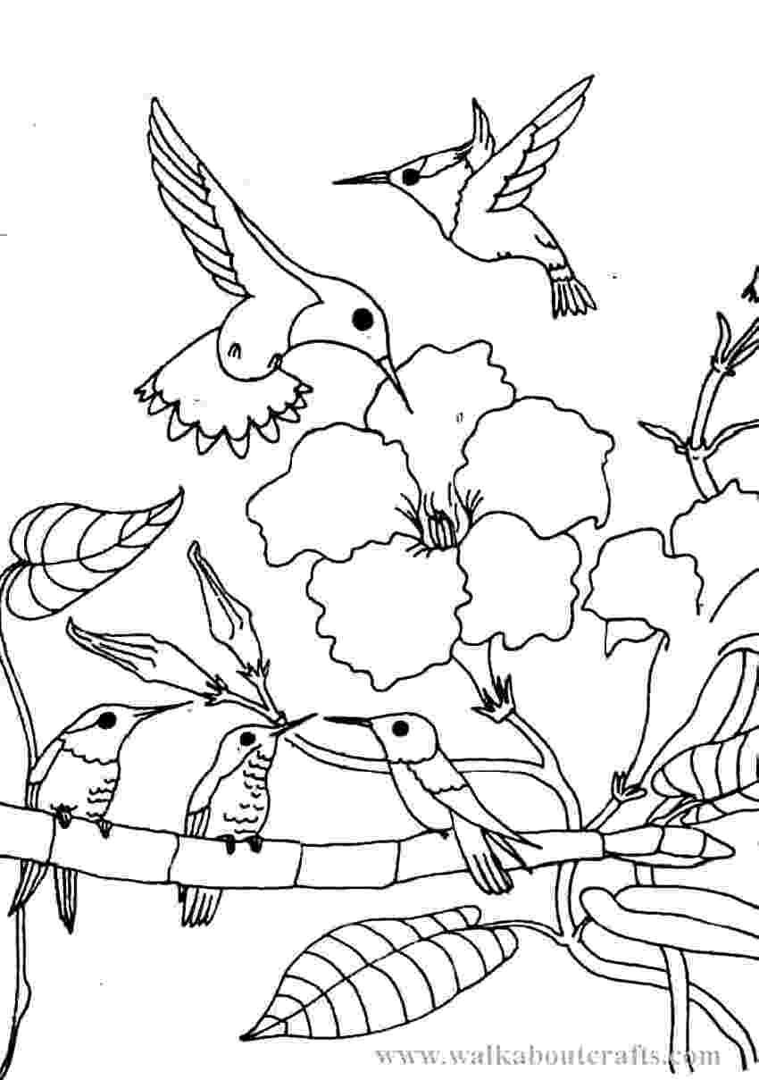 hummingbird coloring sheet free printable hummingbird coloring pages for kids hummingbird sheet coloring