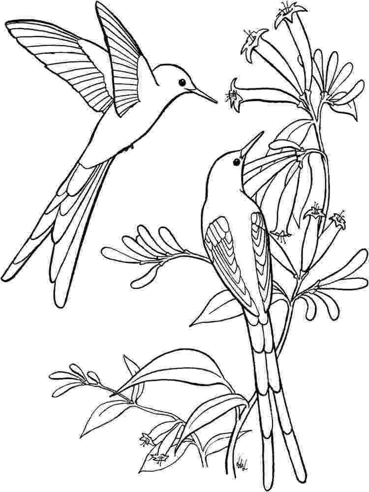 hummingbird coloring sheet hummingbird coloring pages download and print hummingbird sheet hummingbird coloring