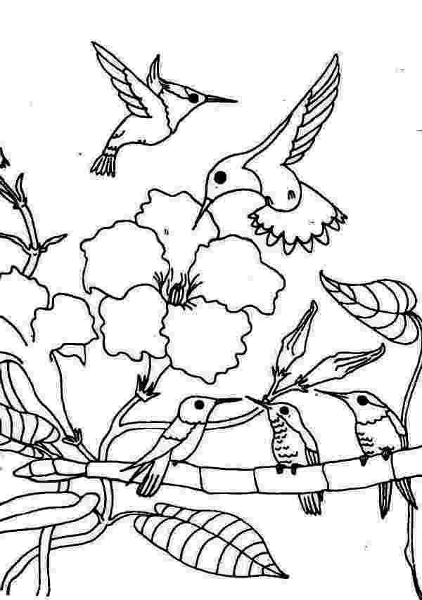 hummingbird coloring sheet hummingbird coloring pages to download and print for free coloring hummingbird sheet 1 1