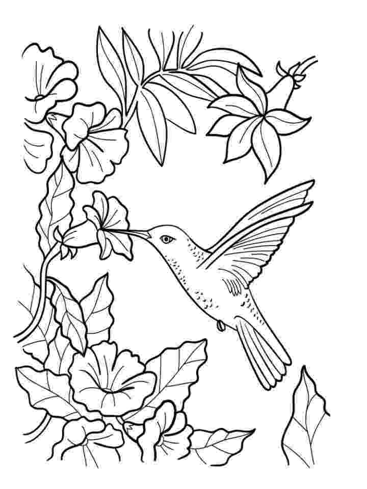 hummingbird coloring sheet hummingbird coloring pages to download and print for free sheet coloring hummingbird 1 1