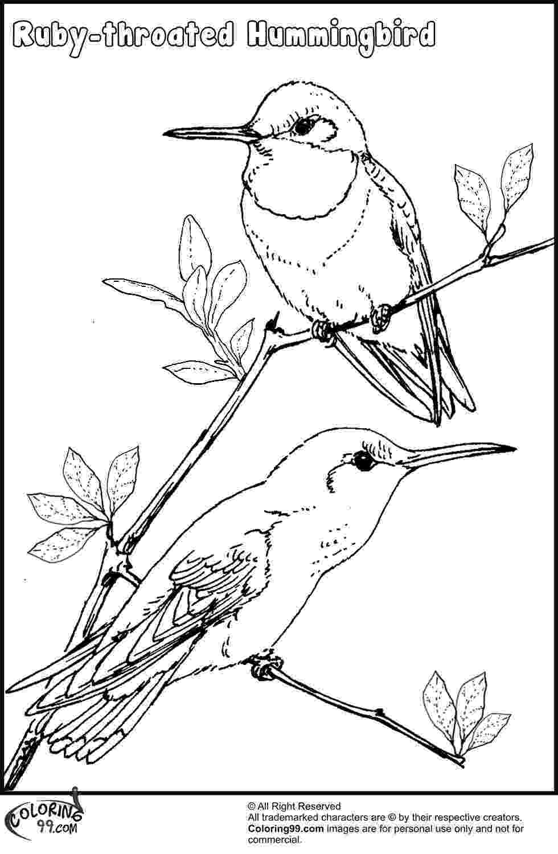 hummingbird coloring sheet printable hummingbird coloring pages for kids cool2bkids hummingbird coloring sheet