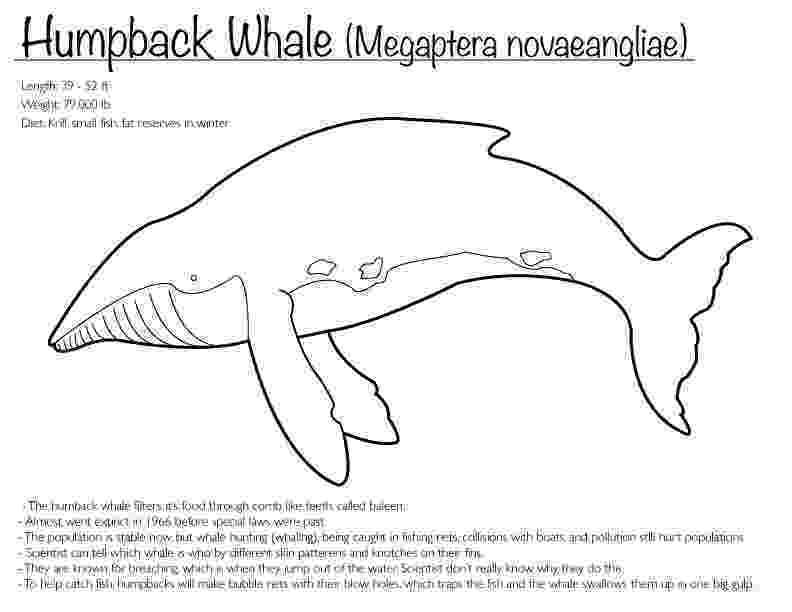 humpback whale pictures to color humpback whale coloring page by finwitch on deviantart color humpback whale to pictures