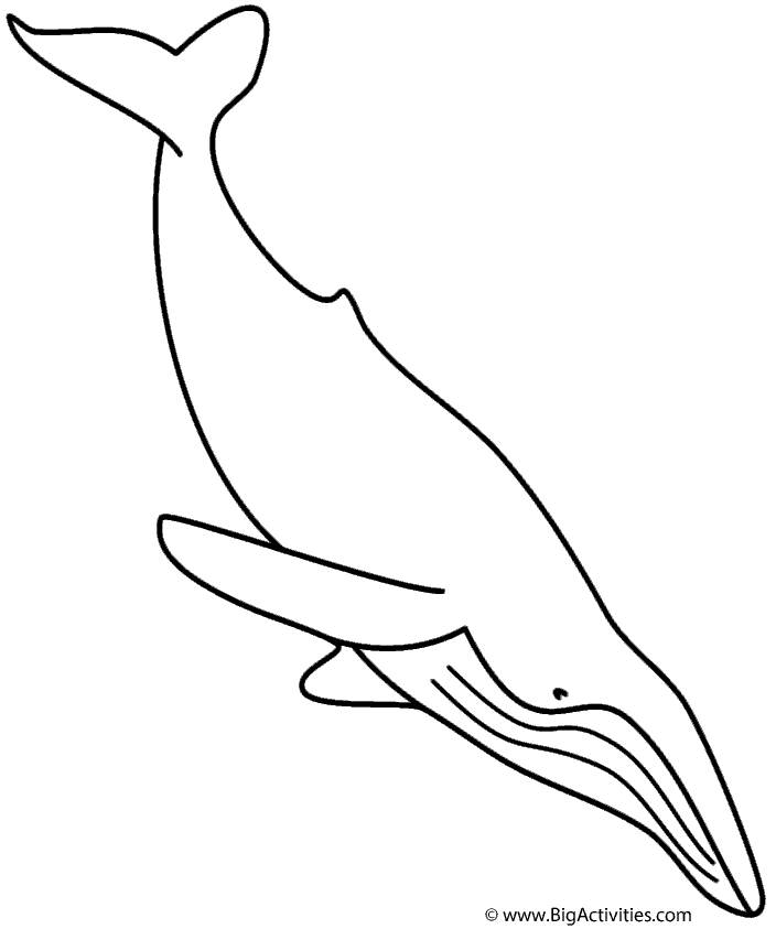 humpback whale pictures to color humpback whale coloring page seamarine color to humpback whale pictures