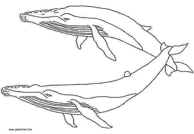 humpback whale pictures to color humpback whale coloring pages whale coloring pages whale color humpback pictures to