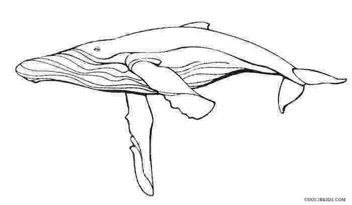 humpback whale pictures to color humpback whale endangered animal coloring page woo jr color whale humpback to pictures