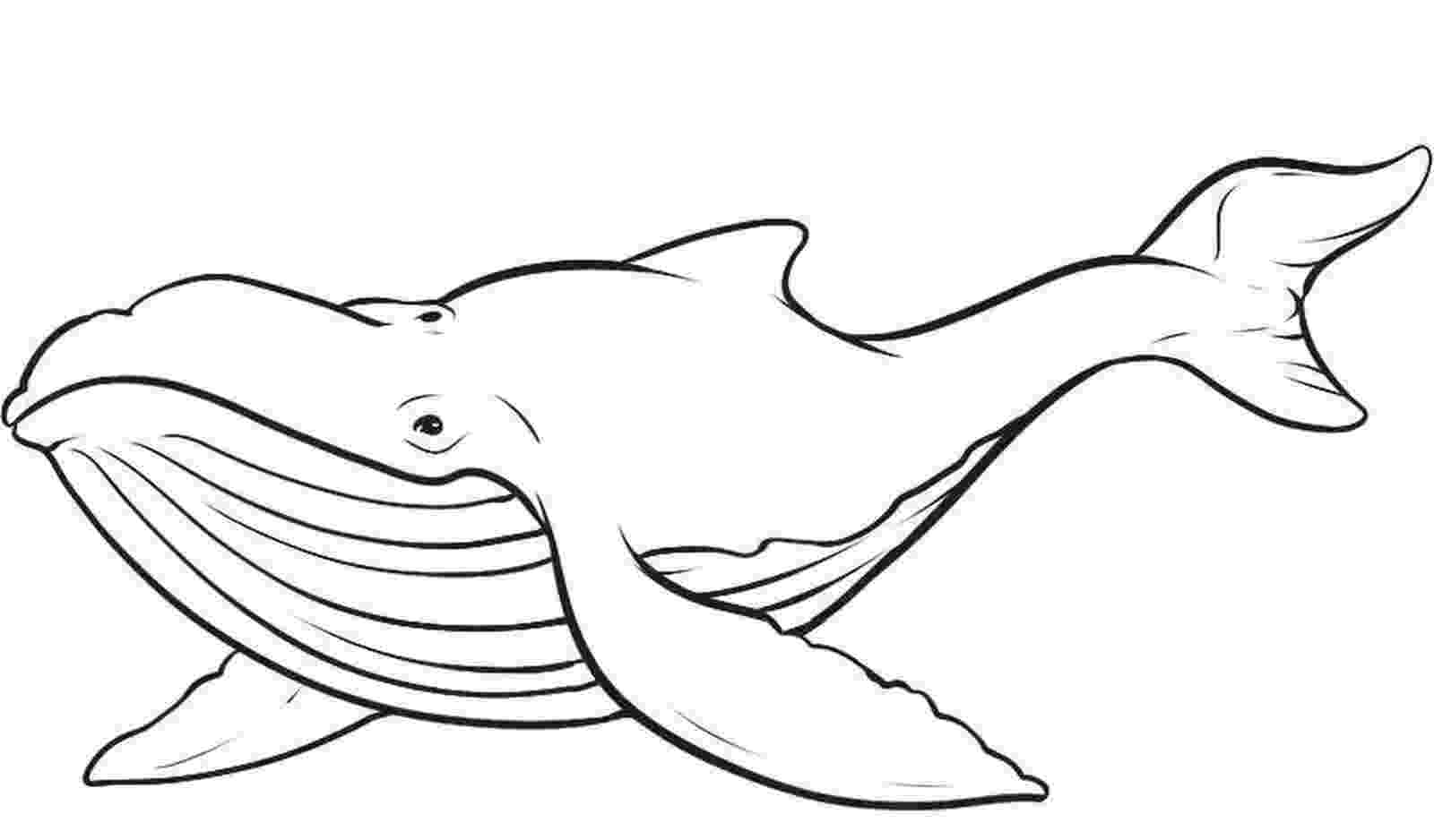 humpback whale pictures to color humpback whale worksheet educationcom humpback whale pictures color to