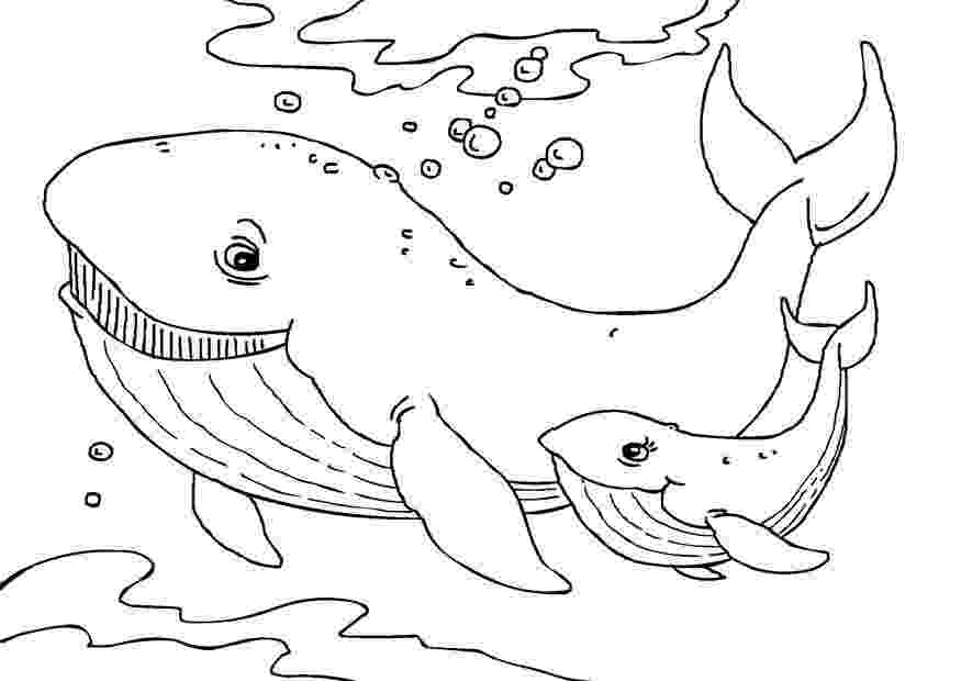 humpback whale pictures to color printable whale coloring pages for kids cool2bkids whale humpback color pictures to