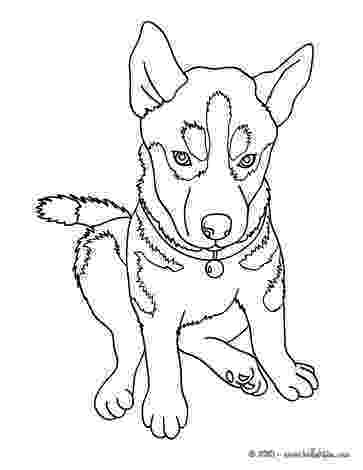 husky colouring pages husky coloring pages hellokidscom colouring pages husky