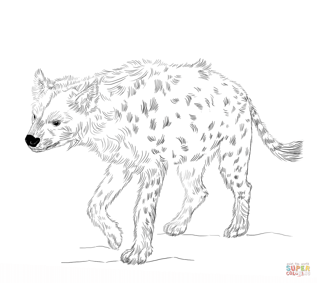 hyena coloring pages hyena coloring pages kidsuki coloring hyena pages