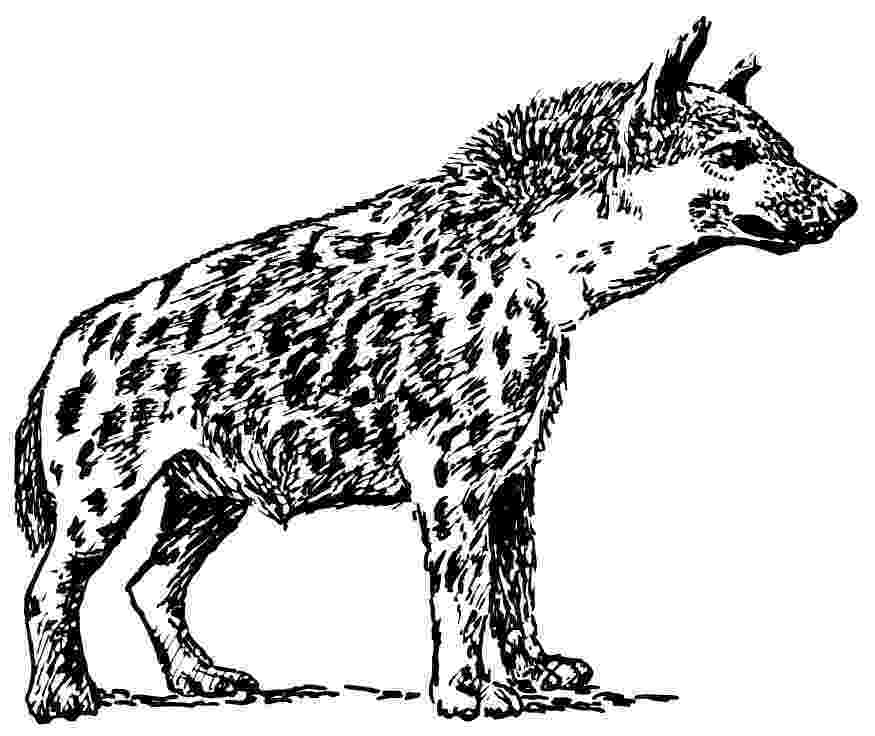 hyena coloring pages hyena coloring pages kidsuki pages coloring hyena