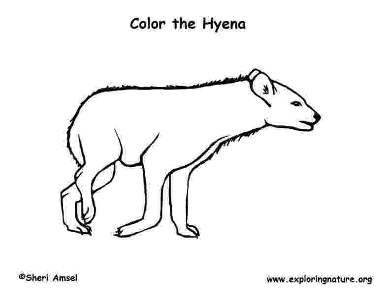 hyena coloring pages striped hyena coloring page free printable coloring pages hyena pages coloring