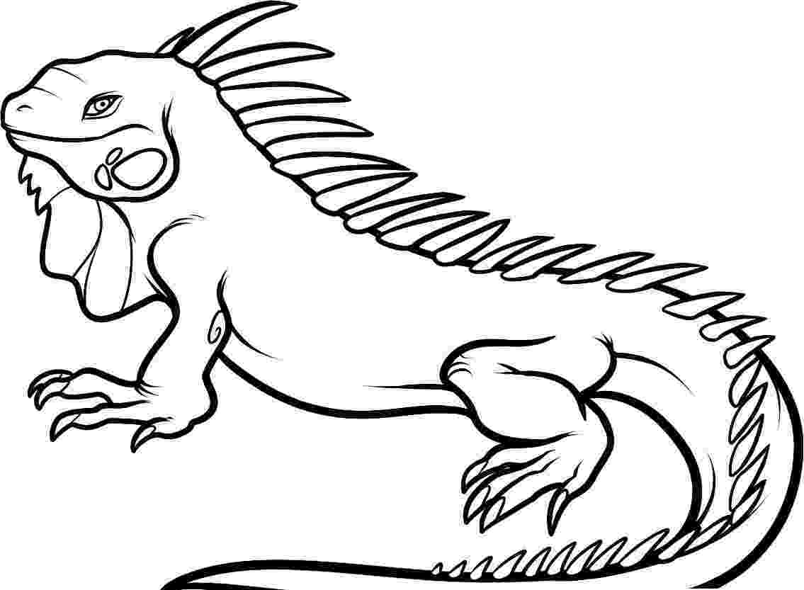 iguana coloring page best iguana clipart 14000 clipartioncom iguana page coloring
