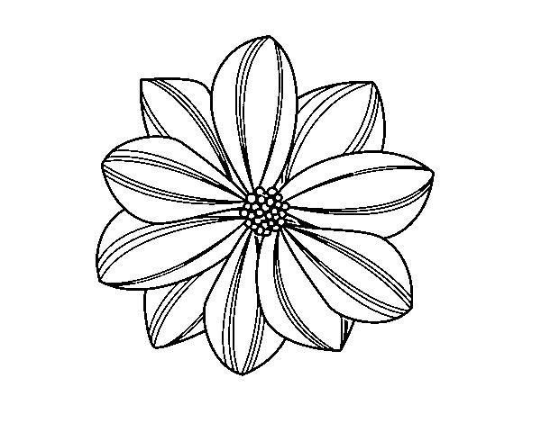 imagenes de margaritas para colorear daisy coloring pages best coloring pages for kids margaritas de para colorear imagenes