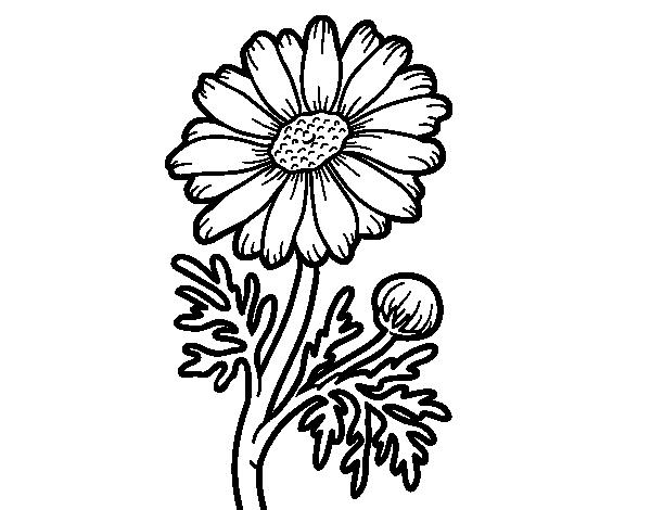 imagenes de margaritas para colorear daisy flower coloring page coloringcrewcom colorear de margaritas para imagenes