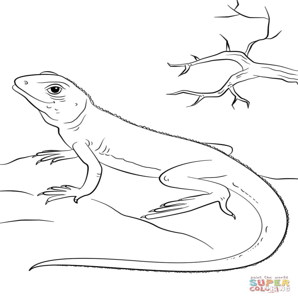 imagenes de reptiles para imprimir a chameleon on alert coloring page printable game reptiles de imagenes para imprimir