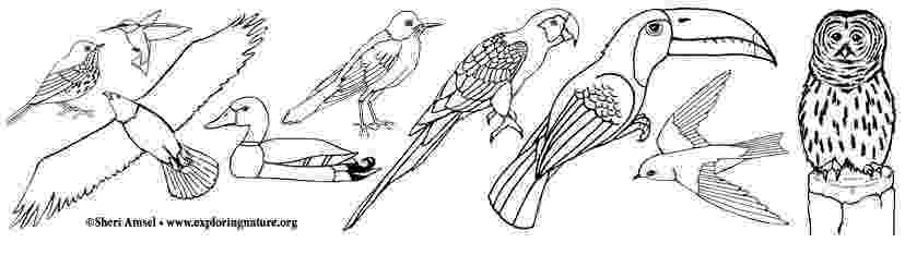 images of birds for colouring birds coloring pages getcoloringpagescom images birds colouring of for